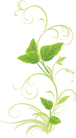 sprig: Decorative sprig with leaves isolated on the white