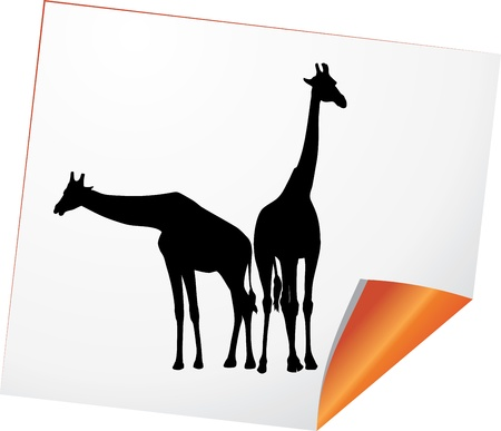 giraffe silhouette: Silhouettes of two giraffes on a paper