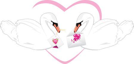 beaks: Coppia di cigni bianchi con le schede di festa a becchi Vettoriali