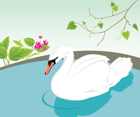 lonesome: White swan swimming in a pond