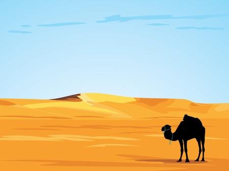 camel in desert: Desert landscape