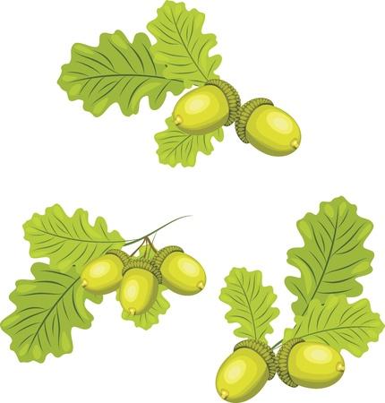 도토리와 참나무 가지 일러스트
