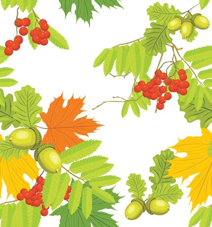 Acorns, rowan and maple leaves isolated on the white  Autumn background Vector