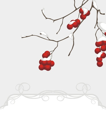 Rowan branch in the snow. Decorative background