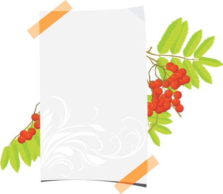 Curled paper sheet with rowan branch Stock Vector - 14837916