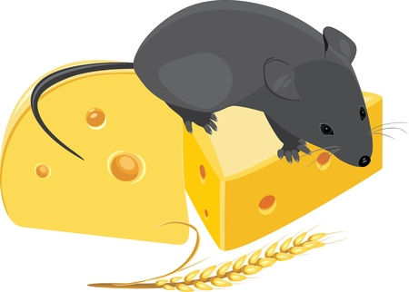 Field mouse, wheat ear and pieces of cheese Vector