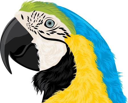 macaw: Parrot head