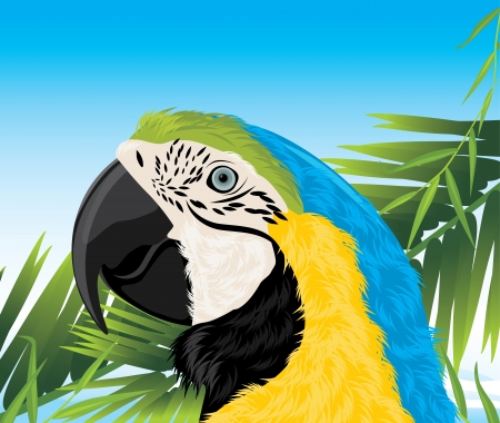 ara: Parrot among palm branches