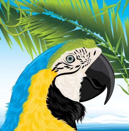 Parrot and palm branches Vector