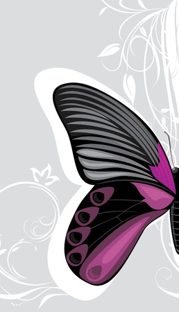 feeler: Butterfly on the decorative gray background