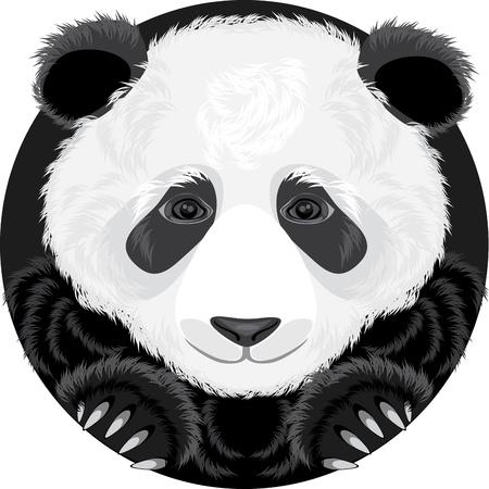 fell: Panda