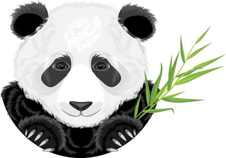 Panda with bamboo branch Vector