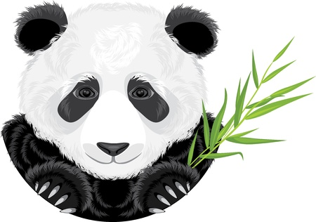 herbivorous: Panda with bamboo branch