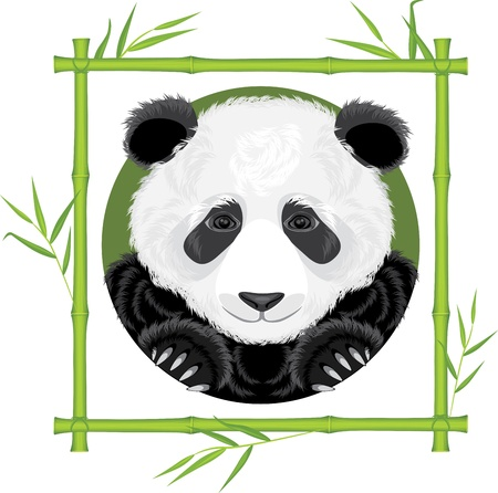 Panda in the bamboo frame Vector