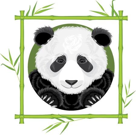 Panda in the bamboo frame Stock Vector - 18655749