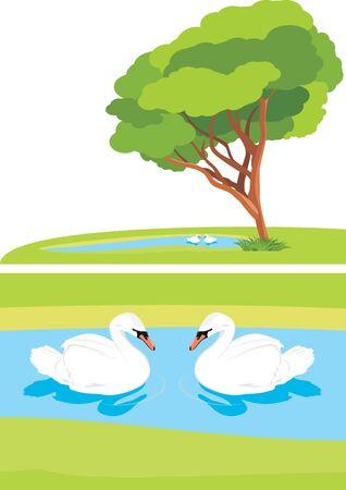 swan lake: White swans in the pond park Illustration