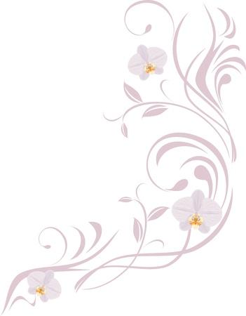 蘭の花、白で隔離されると観賞用の小枝  イラスト・ベクター素材