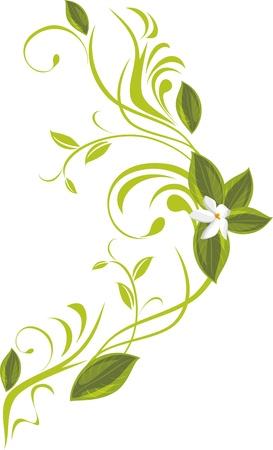 a sprig: Blooming sprig Illustration