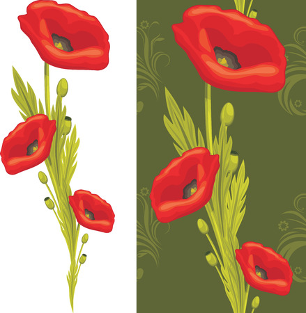 poppy flowers: Bouquet of red poppies