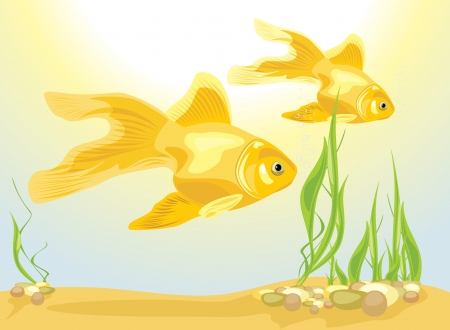 Two goldfishes among algae and pebbles Stock Vector - 24643728