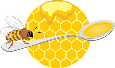 apiculture: Honeybee on the spoon  Icon for design