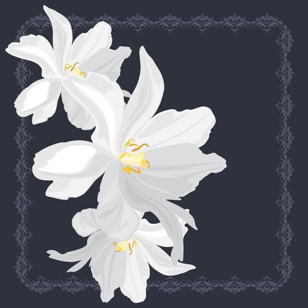 Flores blancas en el marco ornamental Foto de archivo - 27375659