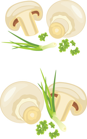 chives: Mushrooms with parsley and chives isolated on the white