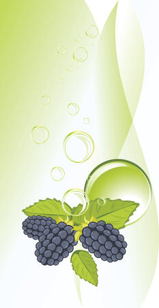 Blackberry and bubbles on the abstract background Illustration