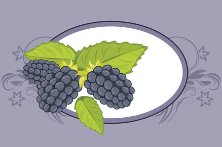 blue berry: Frame with blackberry  Label for design