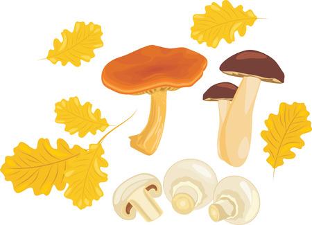 fungoid: Mushrooms with oak leaves
