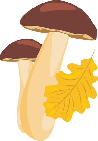fungoid: Mushrooms and oak leaf Illustration