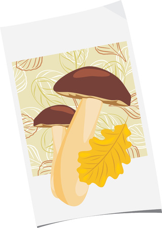 uneatable: Paper sheet with mushrooms and oak leaf Illustration