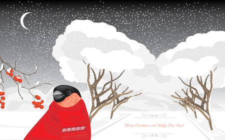 blizzards: Bullfinch in the winter park. Christmas card