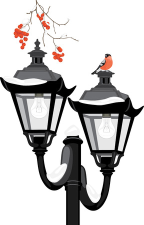 Bullfinch sitting on a street lantern