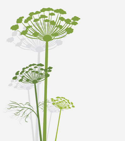 artificial flowers: Silhouette of blooming fennel Illustration