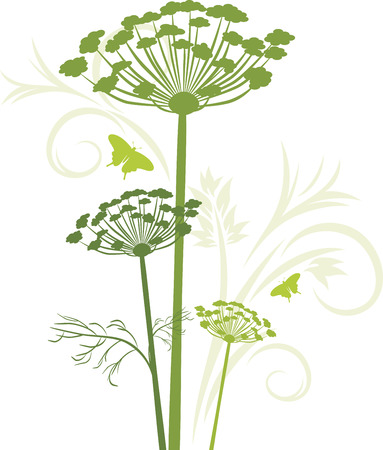 Silhouette of blooming fennel isolated on the white