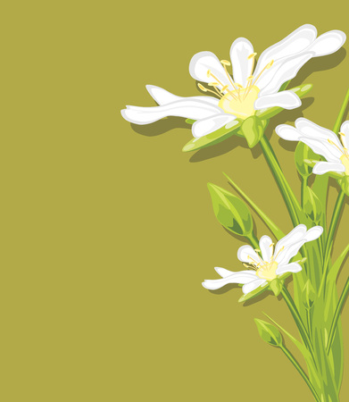 burgeon: White spring flowers on a green background