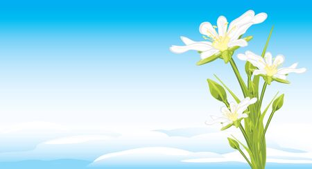 skyscape: White spring flowers on a skyscape Illustration