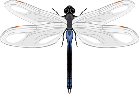 naturalist: Dragonfly isolated on a white