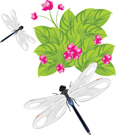 naturalist: Dragonfly flying over the flowers Illustration