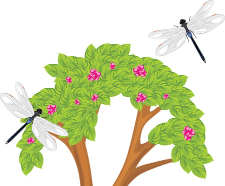 naturalist: Dragonfly flying over the flowering bush