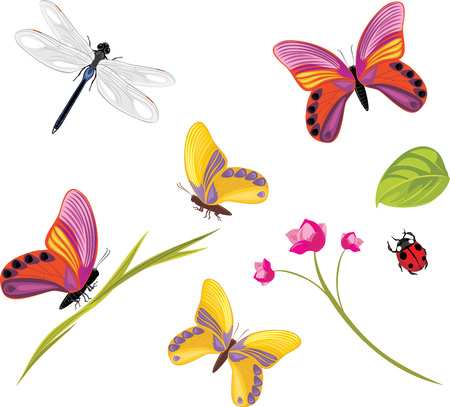 butterfly vector: Insects isolated on a white background