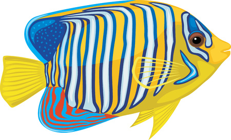 flippers: Bright tropical fish isolated on white background Illustration