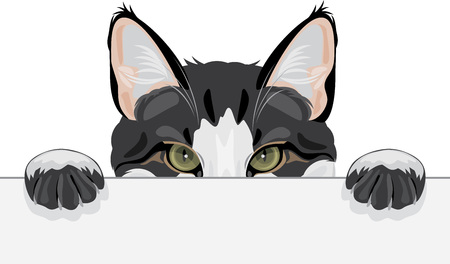 Peeping funny cat on white background, vector illustration.