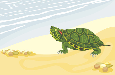Turtle on the sandy shore Illustration