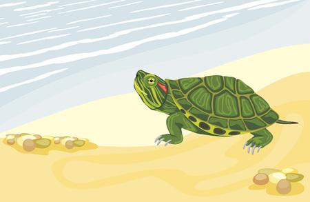 Turtle on the sandy shore Ilustrace