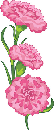 Beautiful bouquet of pink carnations