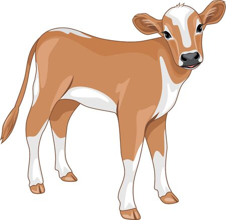 Cute calf isolated on white Stock Vector - 127780940