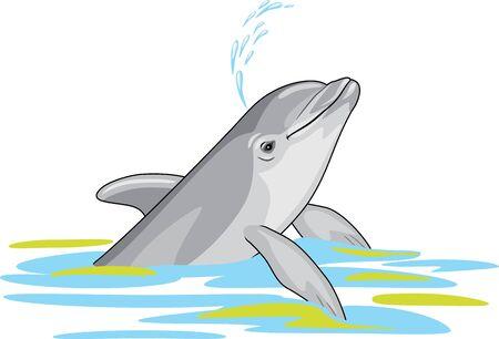 Happy dolphin splashes water Illustration