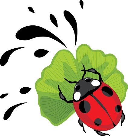 Ladybug on ginkgo biloba leaf